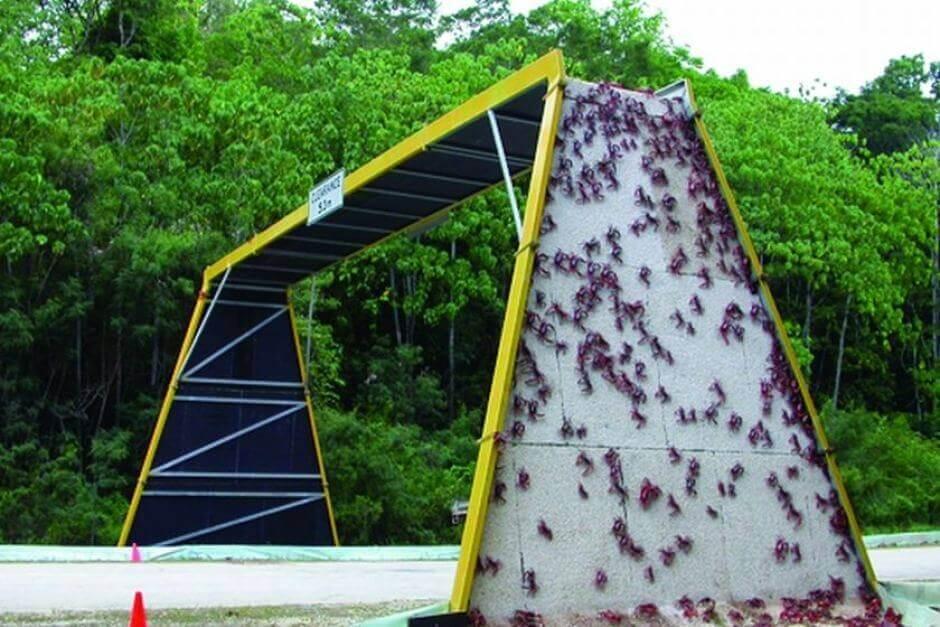 avustralya-ekolojik-köprü-yengeç.jpg