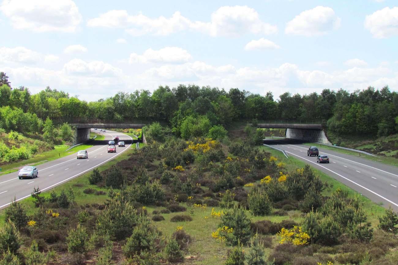 ekolojik-geçit-köprü-