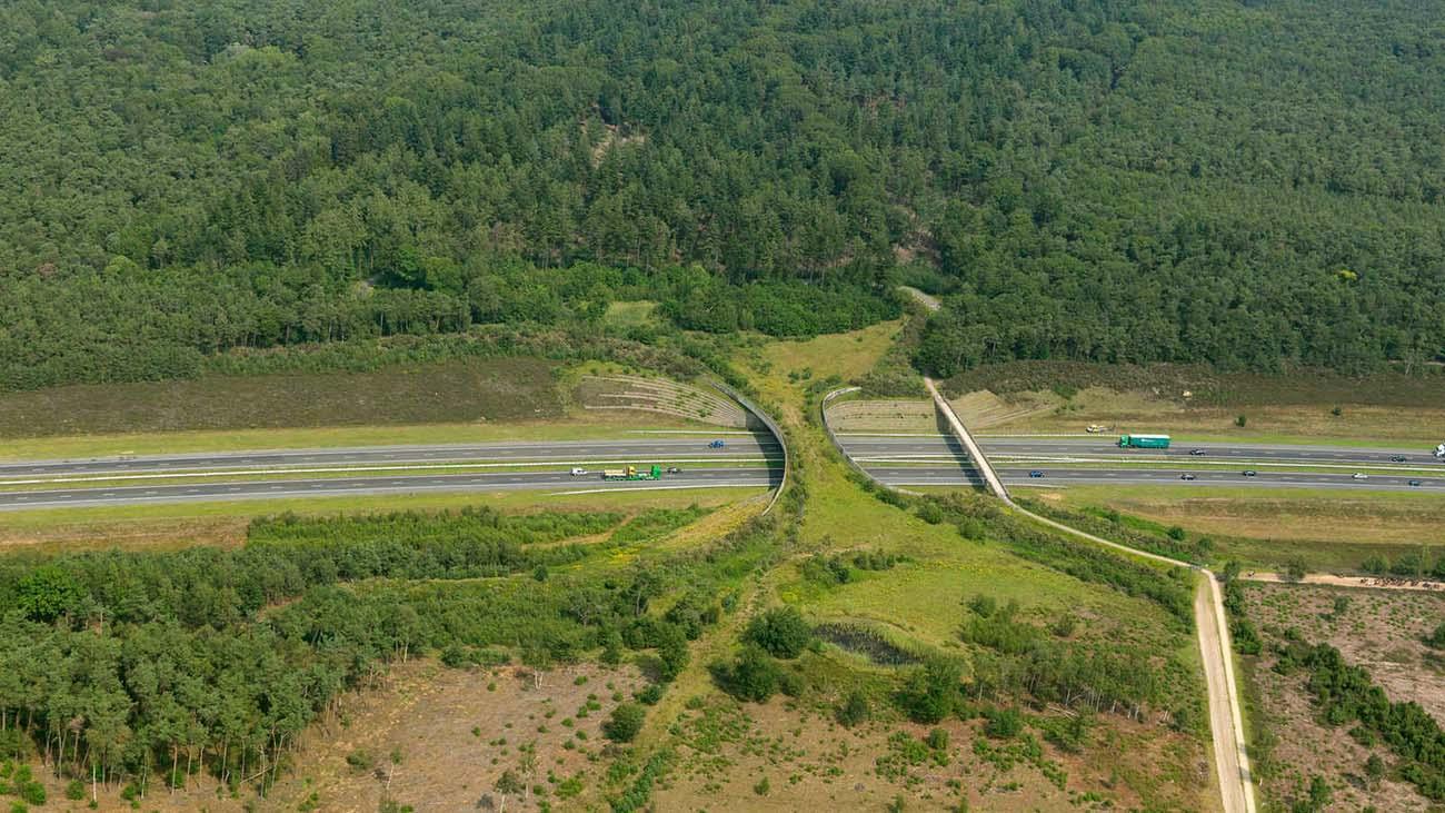 ekolojik-köprü-örnek-hollanda