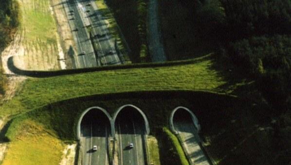 ekolojik-köprü-11