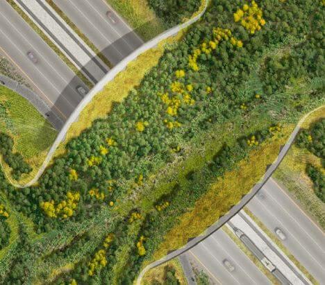Ekolojik Köprü, Ekolojik Geçit Nedir? Neden Yapılır?