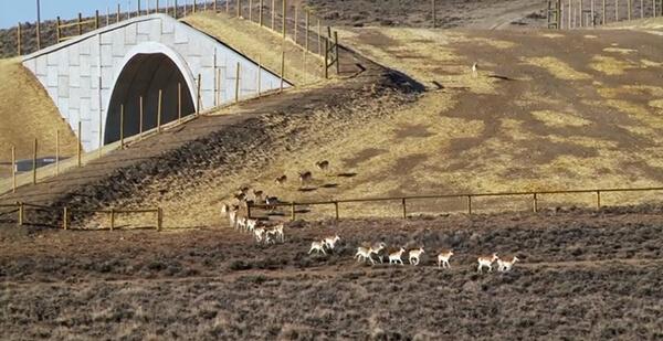 ekolojik-köprü-abd2