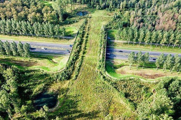 ekolojik-köprü-hollanda