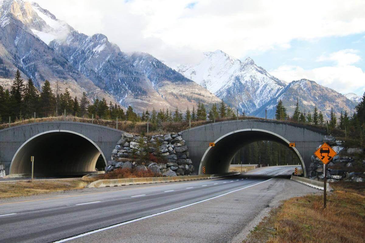 ekolojik-köprü