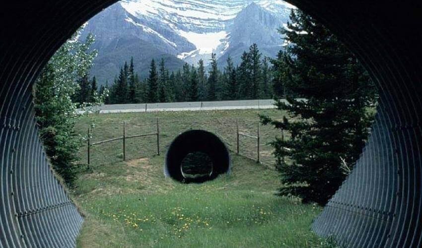 kanada-ekolojik-alt-geçit