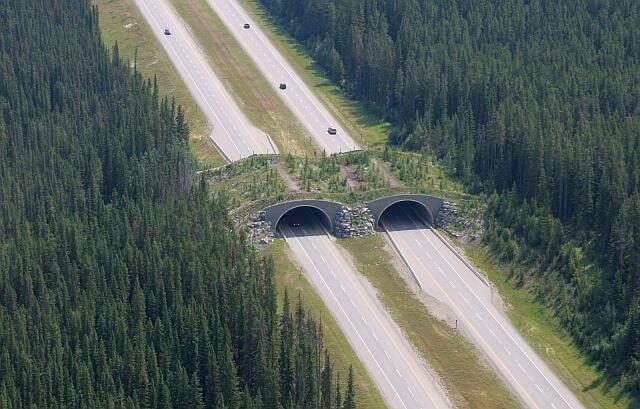kanada-ekolojik-köprü (2)