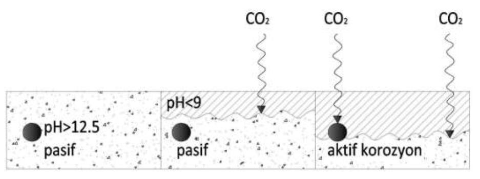 karbonatlaşma-donatı